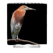 Bird On Black Shower Curtain