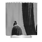 Bird On Cactus Shower Curtain