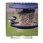 Bird On Feeder Shower Curtain