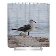 Bird On The Beach Shower Curtain