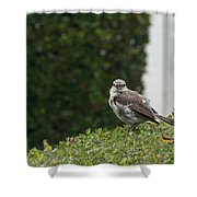 Bird On The Hedges Shower Curtain