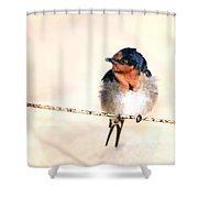 Bird On Wire Shower Curtain