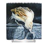 Bird Original Oil Painting Shower Curtain by Natalja Picugina