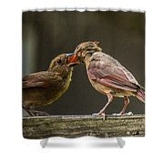 Bird Parenting Shower Curtain