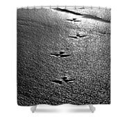 Bird Prints In The Sand Black And White Shower Curtain
