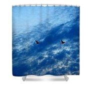 Bird Set Free II  Shower Curtain