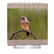Bird Solitude Hbn1 Shower Curtain