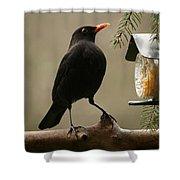 Bird Table Shower Curtain