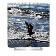 Bird Taking Flight On The Shore Shower Curtain
