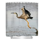 Bird Taking Off Shower Curtain