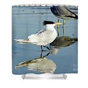 Bird - Tern - Reflection Shower Curtain