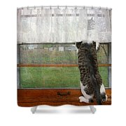 Bird Watching Kitty Cat Shower Curtain by Andee Design