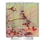 Bird Waxwing Shower Curtain