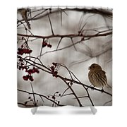 Bird With Berry Shower Curtain