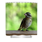 Bird With Punk Attitude Shower Curtain