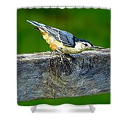 Bird With The Seed Shower Curtain