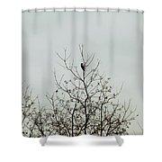 Bird005 Shower Curtain