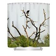 Bird011 Shower Curtain