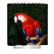 Birdie Shower Curtain