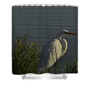 Birdman Shower Curtain