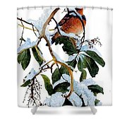 Birds 05 Varied Thrush On Arbutus Robert Bateman Sqs Robert Bateman Shower Curtain