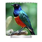 Birds 108 Shower Curtain