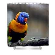 Birds 27 Shower Curtain