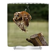 Birds 47 Shower Curtain