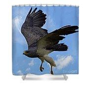 Birds 49 Shower Curtain