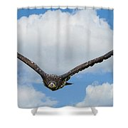 Birds 65 Shower Curtain