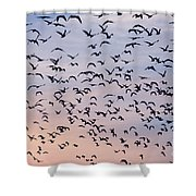 Birds A Flock Of Seagulls Shower Curtain