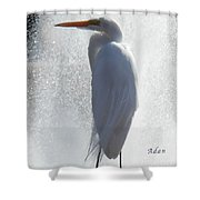 Birds And Fun At Butler Park Austin - Birds 2 Macro Shower Curtain by Felipe Adan Lerma