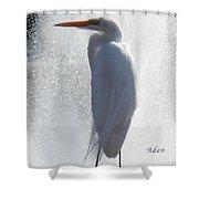 Birds And Fun At Butler Park Austin - Birds 2 Macro Shower Curtain