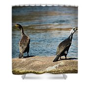 Birds And Lake Shower Curtain
