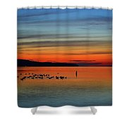 Birds At Dawn By The Buoy  Shower Curtain