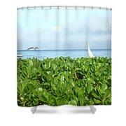 Bird's-eye View Of Hawaii Shower Curtain