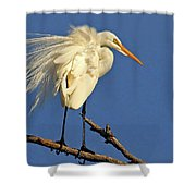 Birds - Great Egret Shower Curtain
