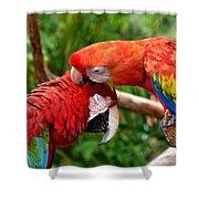 Birds In Love Shower Curtain