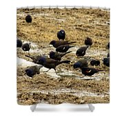 Birds In The Mud Shower Curtain
