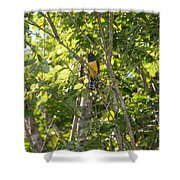 Birds Inside The Coba Ruins Shower Curtain