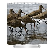 Birds Of A Feather 1 Shower Curtain