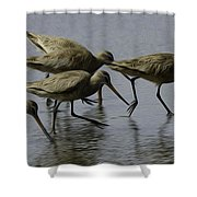Birds Of A Feather 3 Shower Curtain
