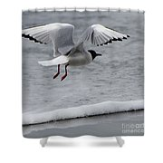 Birds Of A Feather 5 Shower Curtain