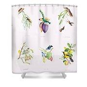 Birds Of Brazil Shower Curtain