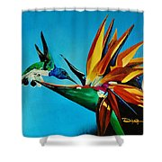 Birds Of Paradise With White Necked Jacobin Hummingbird Shower Curtain