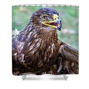 Birds Of Prey Series 3 Shower Curtain