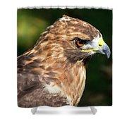 Birds Of Prey Series 5 Shower Curtain