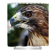 Birds Of Prey Series Shower Curtain