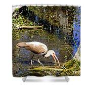 Birds Of The Everglades Shower Curtain