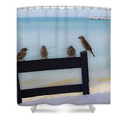 Birds On A Chair Shower Curtain